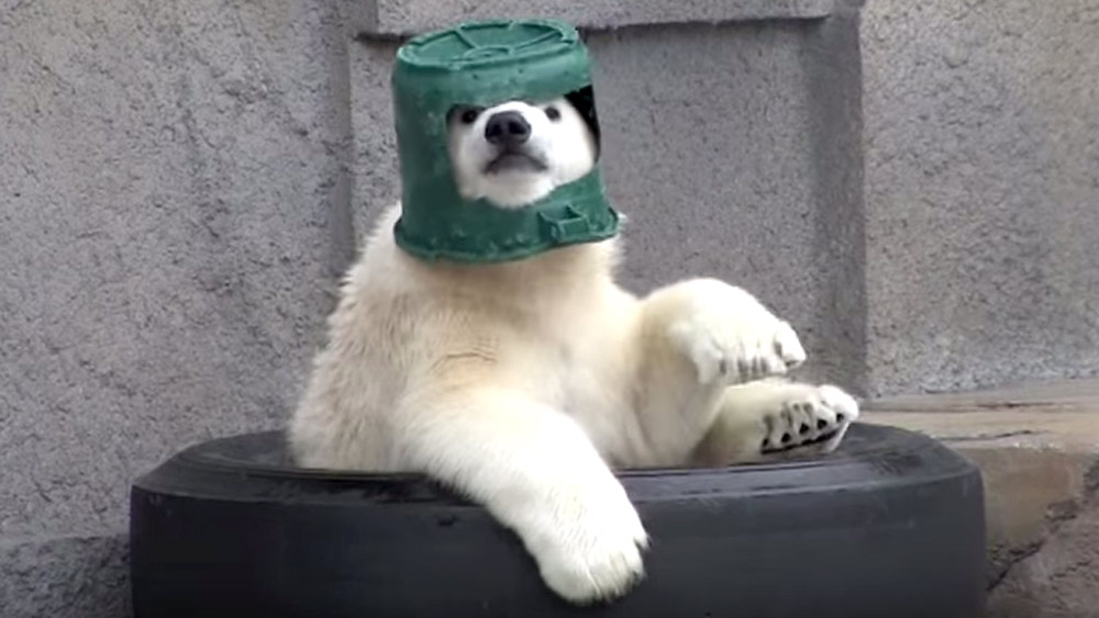 Adorable Polar Bear Cub Wants To Be A Spaceman 9pickle