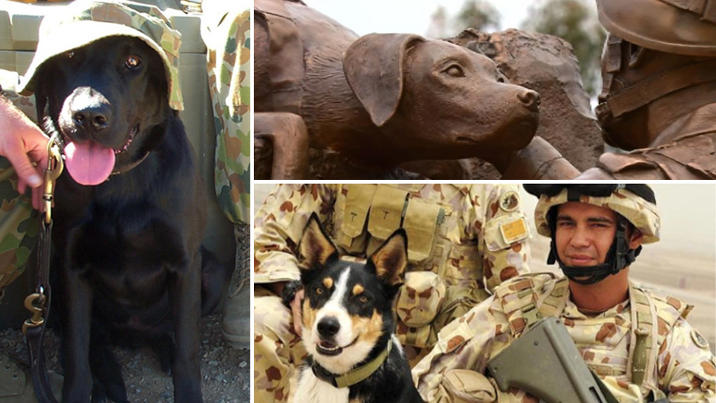 The Australian Military Dogs And Soldiers Killed In Action