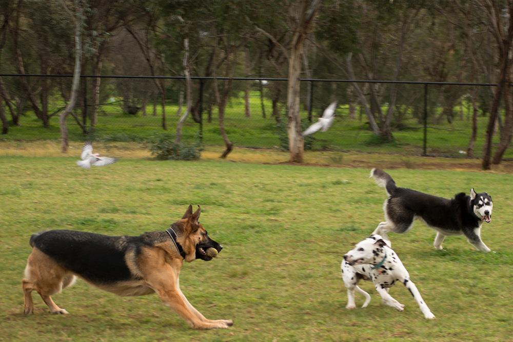 Enclosed Dog Parks Adelaide