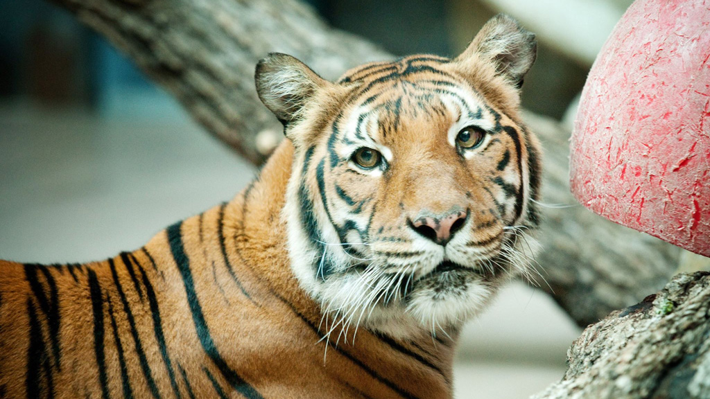 The zoo has confirmed no action will be taken against Mai. (Facebook: Omaha's Henry Doorly Zoo and Aquarium)