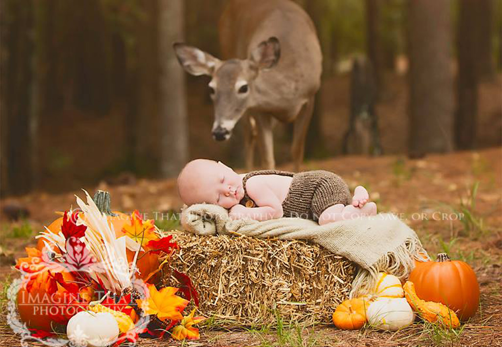 Parents gifted with stunning snaps after wild deer photobombs newborn photoshoot