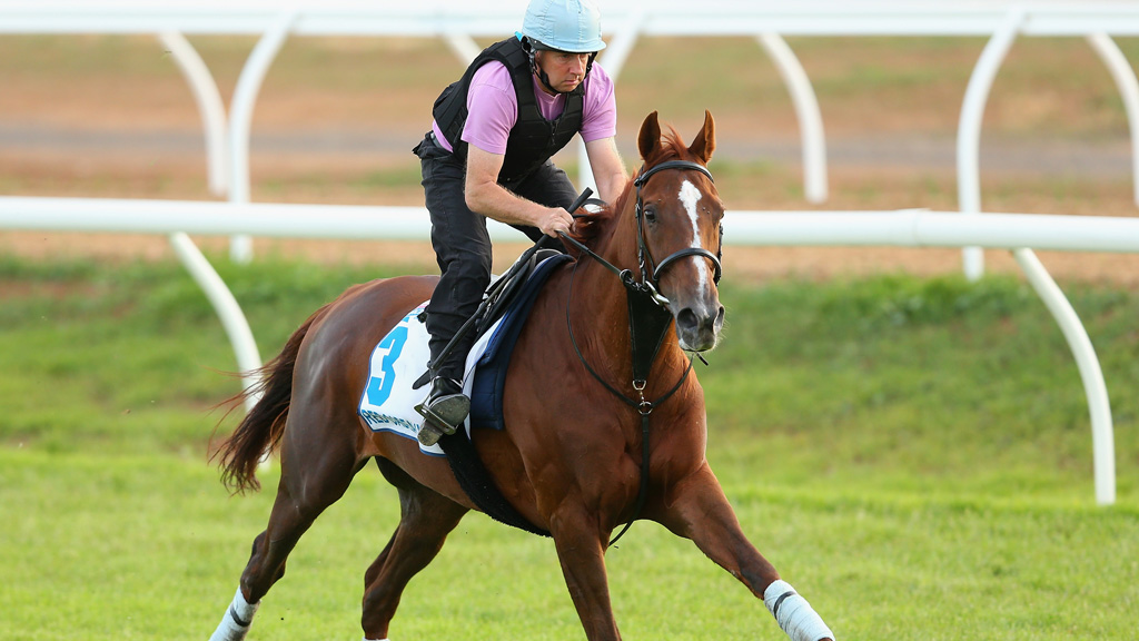 Red Cadeaux in training on Monday. (Getty Images)