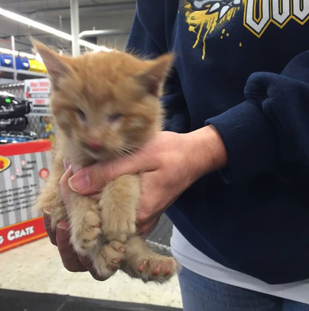 Abandoned kitten born without eyes adopted by rescue volunteer