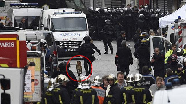 Hero police dog killed in Paris apartment raid
