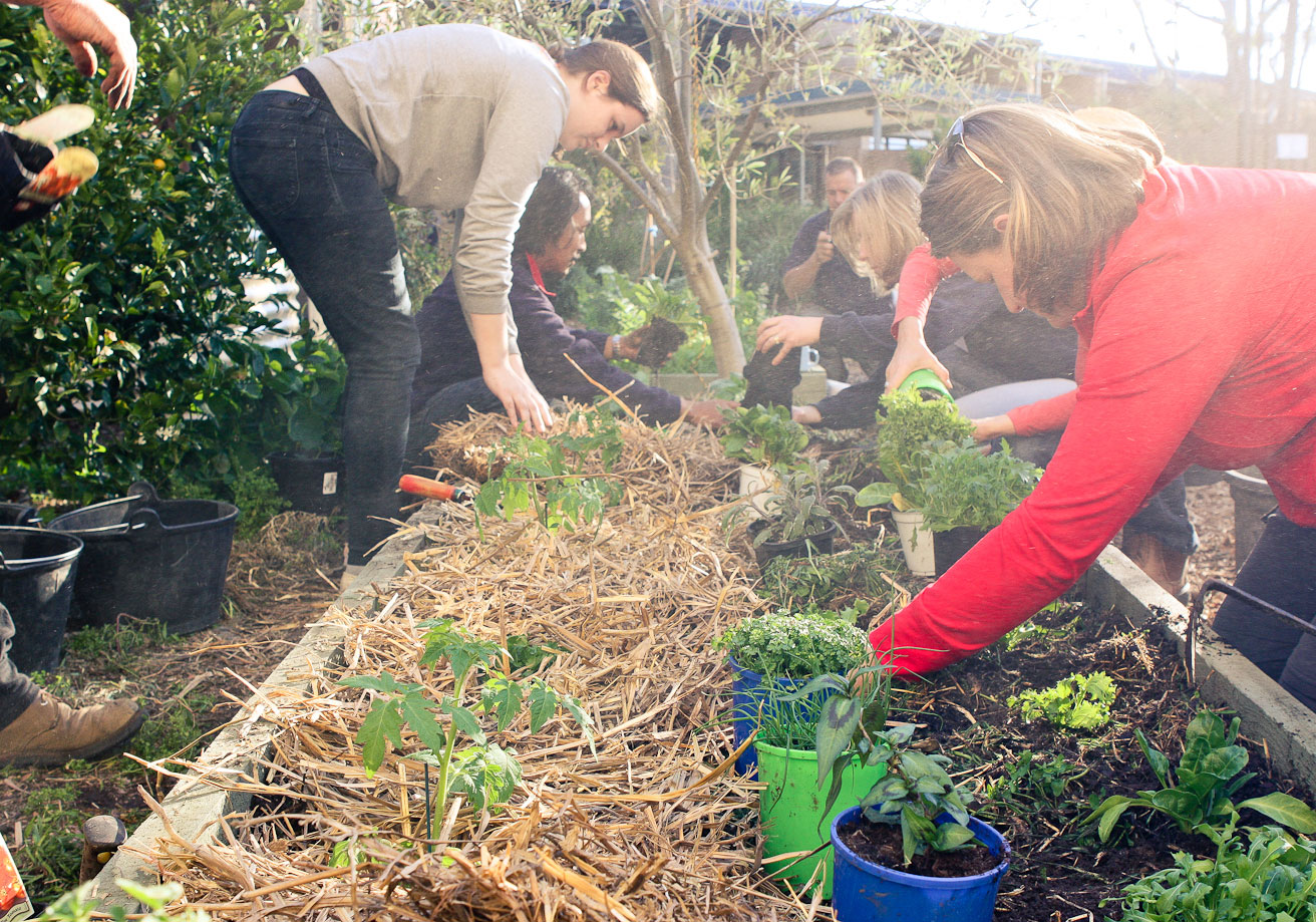 How To Start A Community Garden 9homes