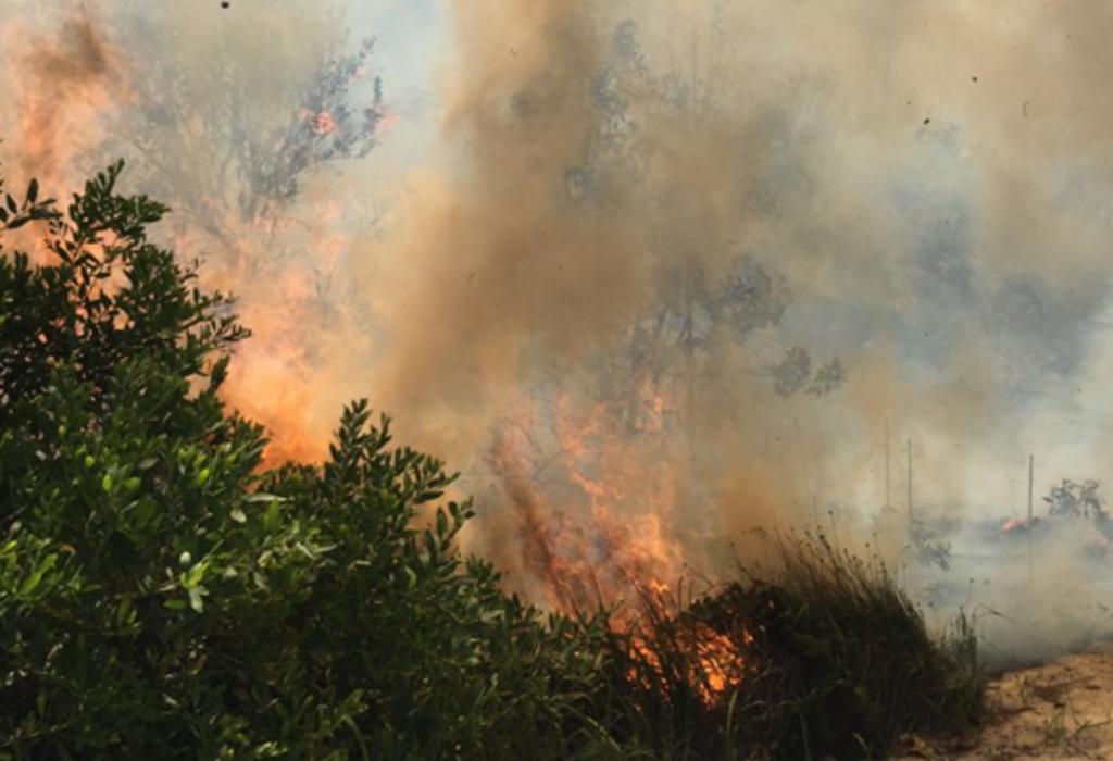 A grass fire has broken out at The Spit. (9NEWS / Brittney Kleyn)