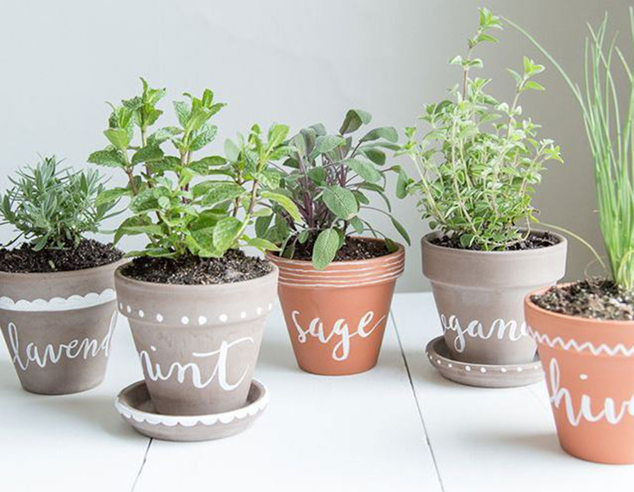 Why are my herbs dying common kitchen herb garden mistakes - Cultivar plantas aromaticas ...