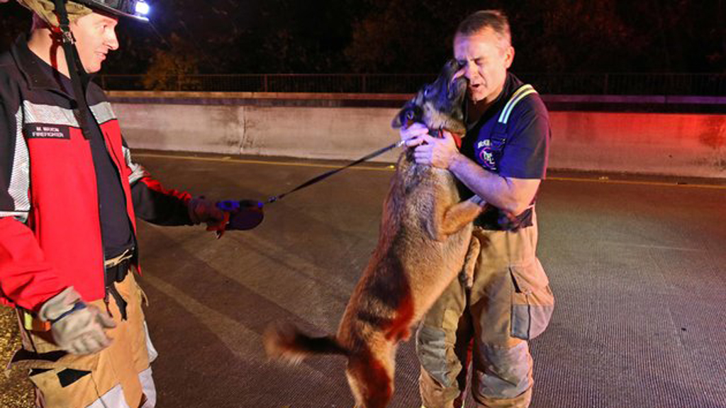 Grateful dog thanks firefighter for rescuing him and his owner