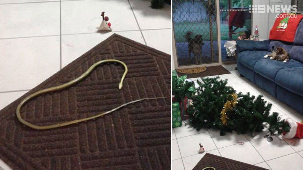 The cat that saved Christmas: Brisbane moggie defeats snake wrapped around family Christmas tree