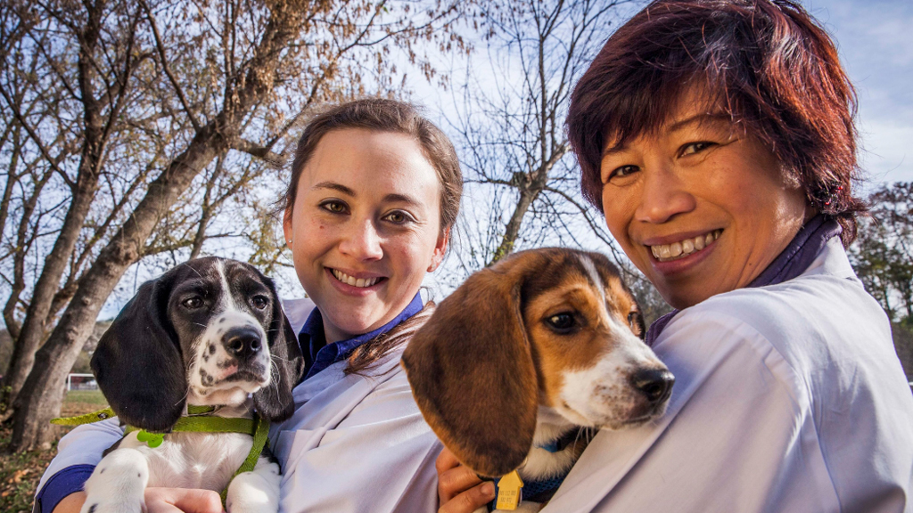 Beagle and beagle cross cocker spaniel puppies were born in the world's first successful canine IVF project. (AAP)