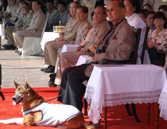 Sarcastic machinist faces death in prison for insulting Thai king's dog