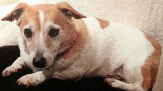Jack Russell killed by Rottweiler 'assaulted' the bigger dog by growling