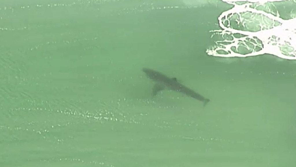 A shark spotted by the 9NEWS helicopter. (File image)