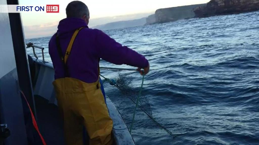 A shark net at Bondi was slashed. (9NEWS)