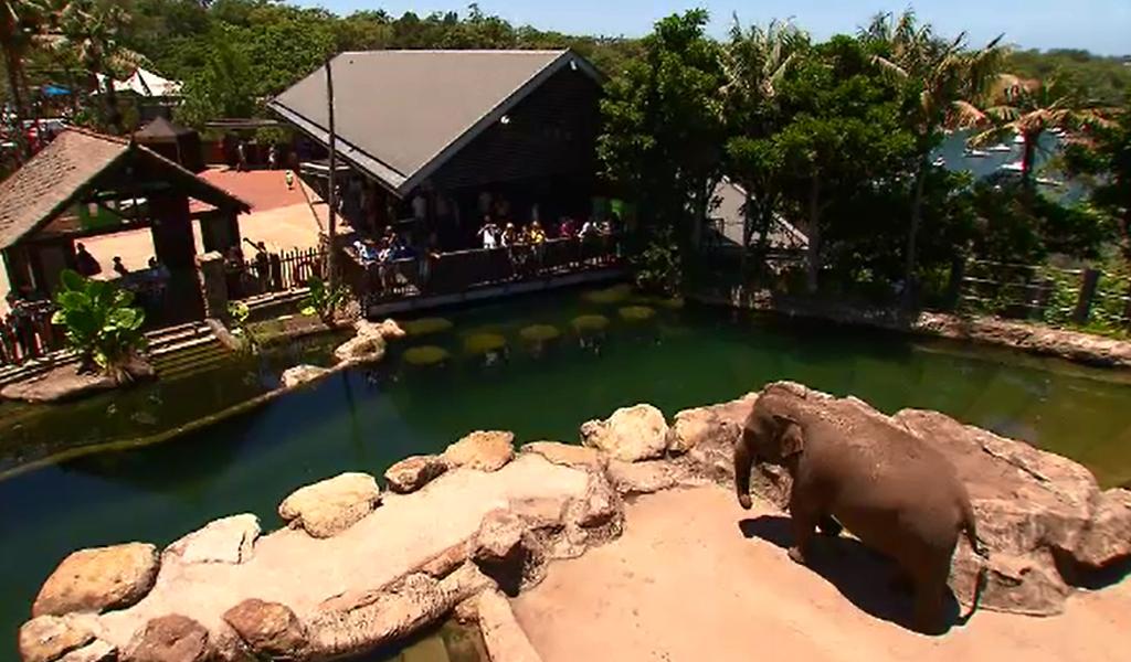 Elephants now have a special habitat at Taronga Zoo. (9NEWS)