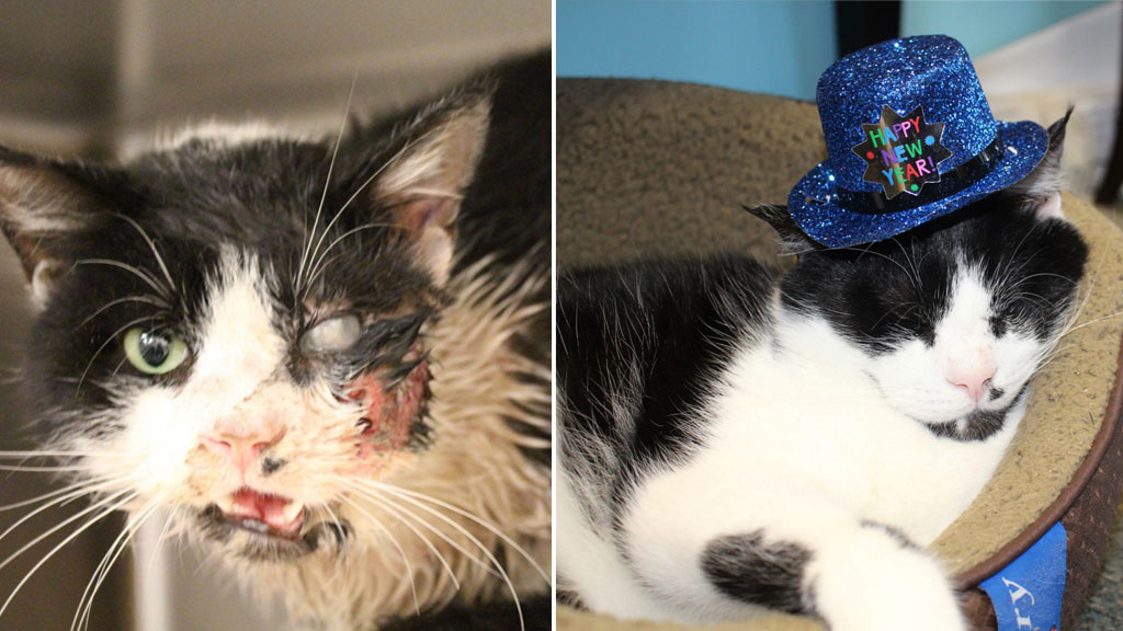 Claws out as custody battle rages over infamous 'zombie cat'