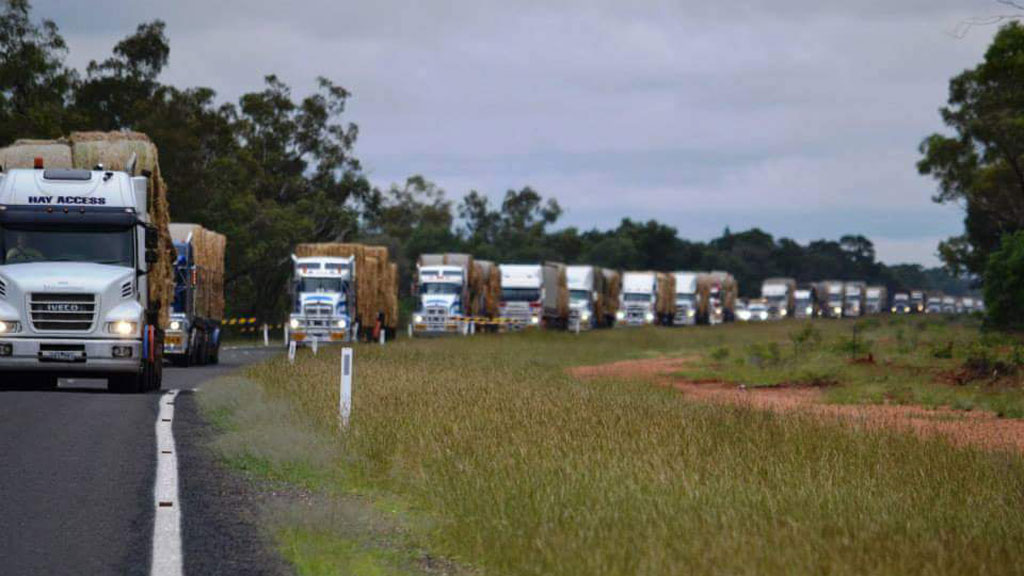 NSW farmer organises convoy of 120 trucks to deliver donated hay to drought-stricken Queensland