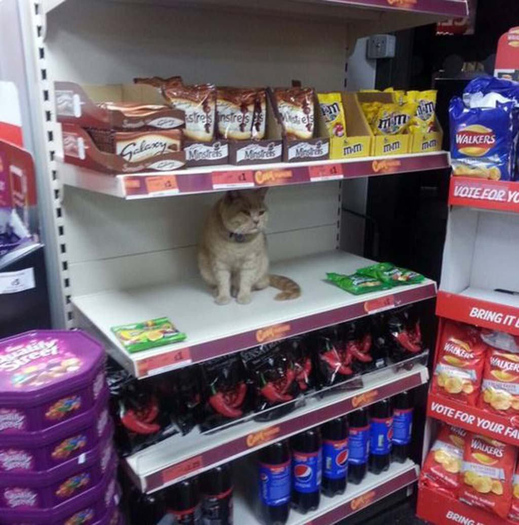 The cat returns to the shop after staff remove him. (Twitter)
