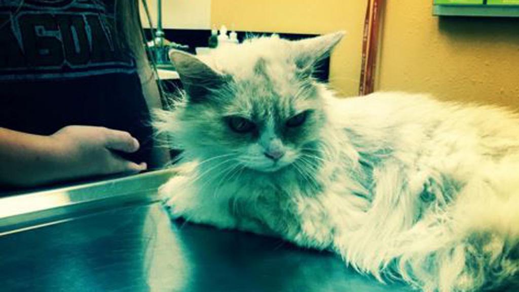 The fierce feline has earned herself the nickname 'Angry Pearl'. (Instagram: @AngryPearl)