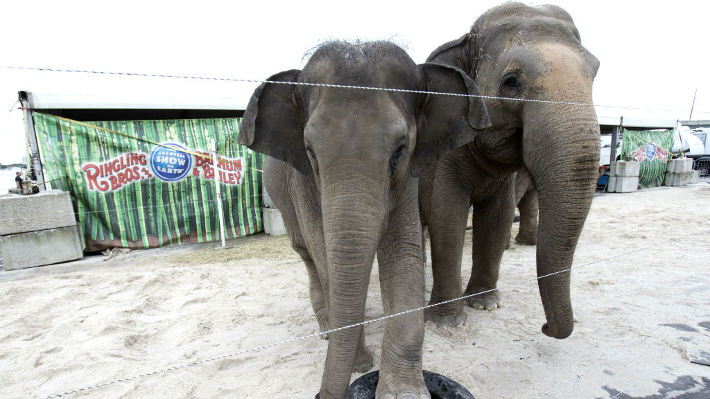 Ringling Bros and Barnum and Bailey Circus to end elephant performances in May