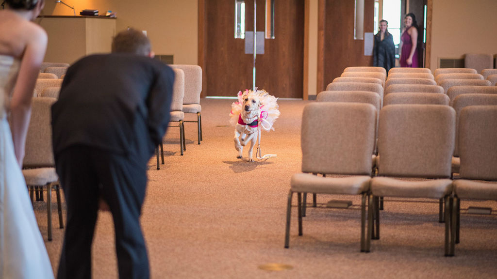 Bella, the service dog in a tutu at her owner's wedding. (Maddie Peschong)