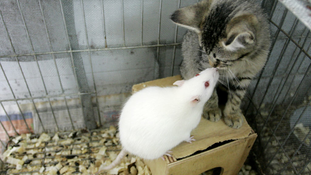 Scientists claim rodents can sense when their partner feels distressed