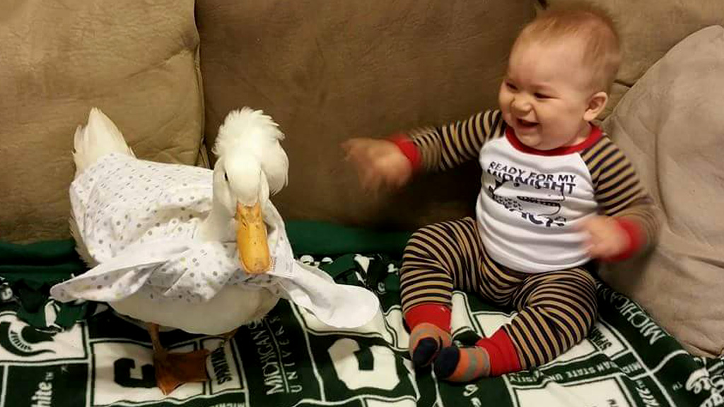 Loyal duck becomes young boy's best friend and protector