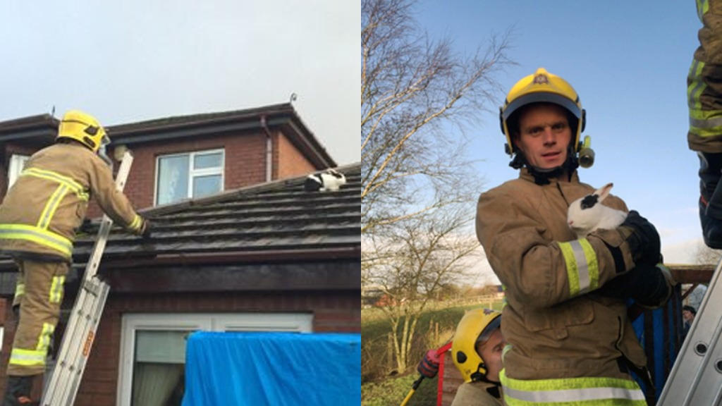 Firemen forced to rescue bunny blown onto roof as storms batter UK