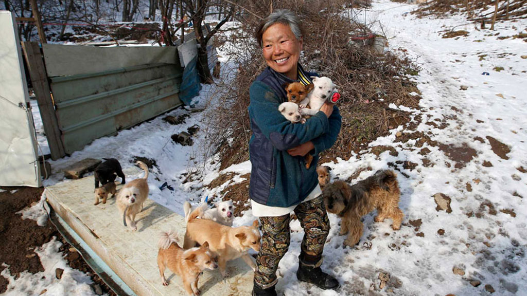 South Korean woman raises 200 dogs she rescued from streets and restaurants