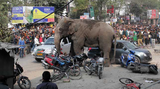 Wild elephant goes on rampage through Indian city