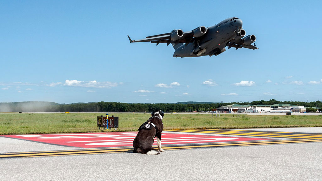 Piper keeps a watchful eye over the aircraft that come through the landing strip. (Airport K9/ Facebook)