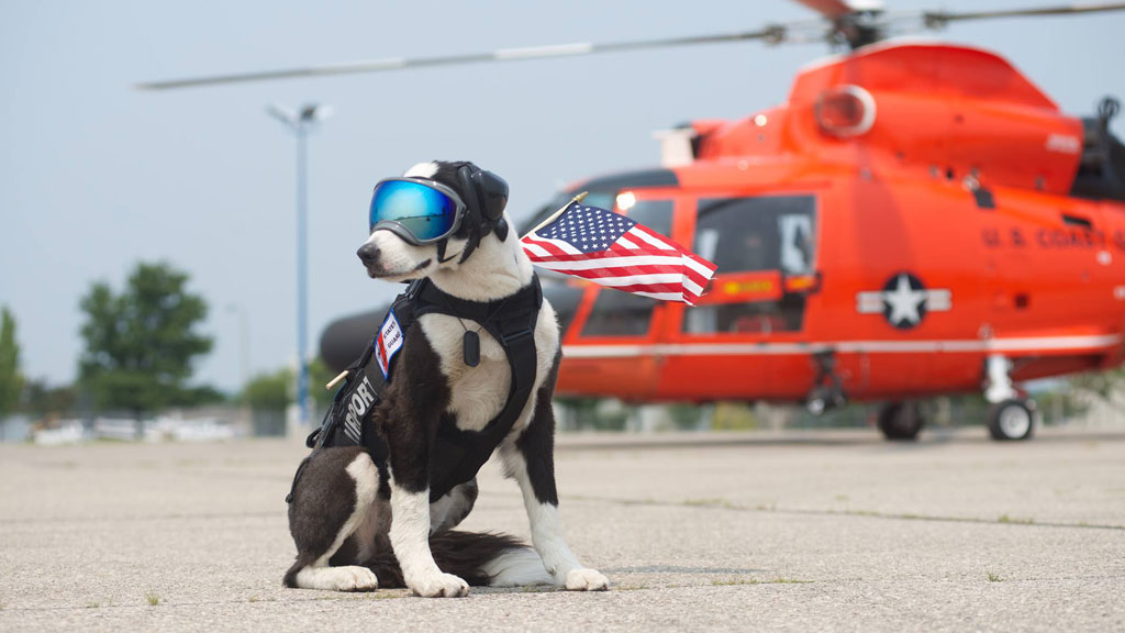 Meet Piper, the US airport K-9 who keeps runways safe