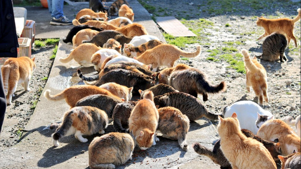 Cat island in Japan tweets plea for cat food and gets more than they can store