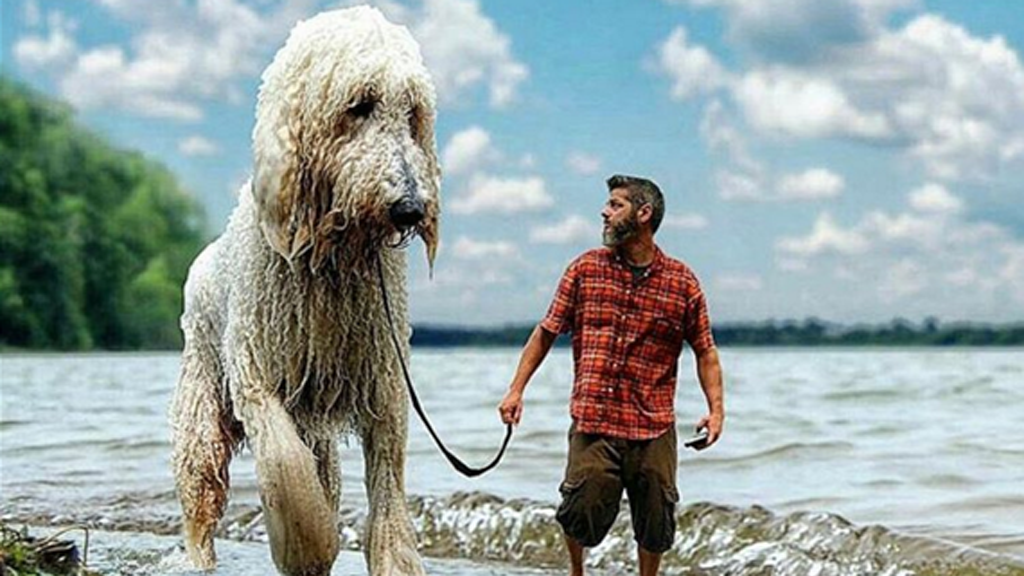 Photographer uses the power of editing to turn pet dog into a giant