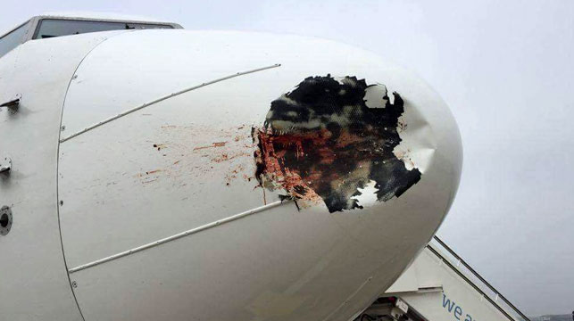 Severely damaged Egyptian plane lands in London after colliding with a flock of birds