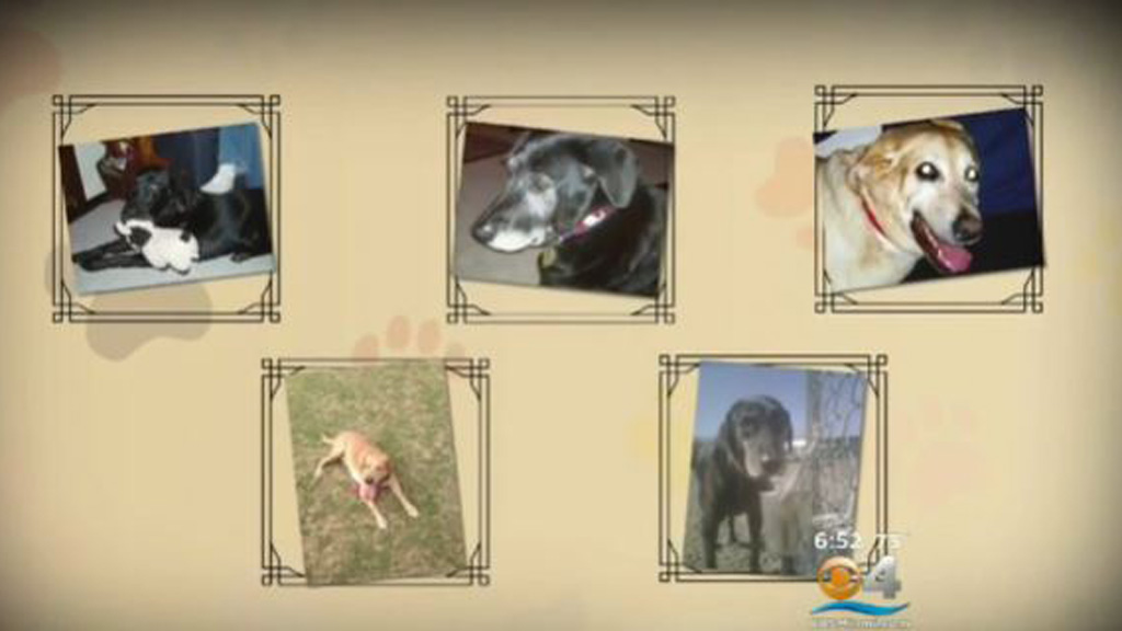 A US pet loss counsellor said leave is important following the death of a pet in order for people to 'function' normally. (CBS Miami)
