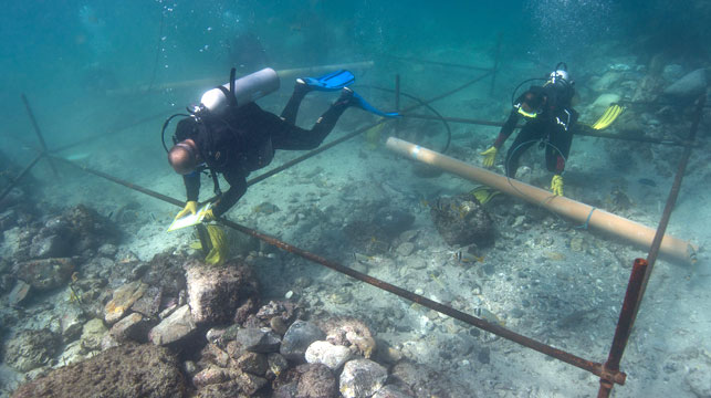 Rare artefacts found at site of ancient European shipwreck