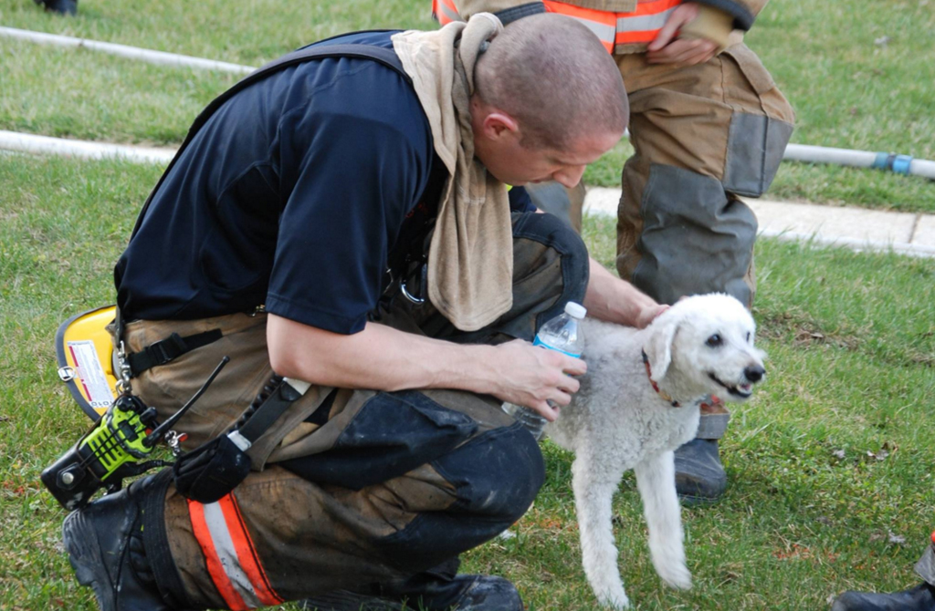 Firefighters rescued the dog from a house fire. (Facebook / Providence Volunteer Fire Company)