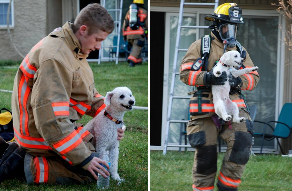 Dog 'smiles' after being rescued from US house fire