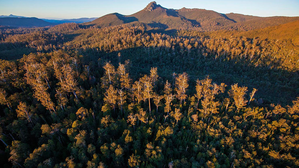 Tasmania abandons logging of World Heritage-listed forest following UNESCO report