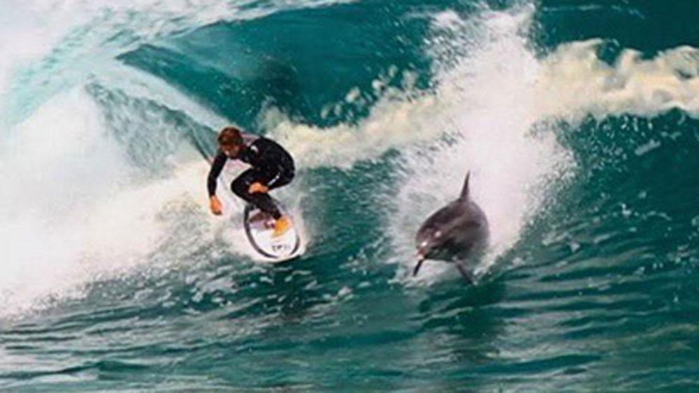 Aussie surfer has close encounter with drop-in dolphin