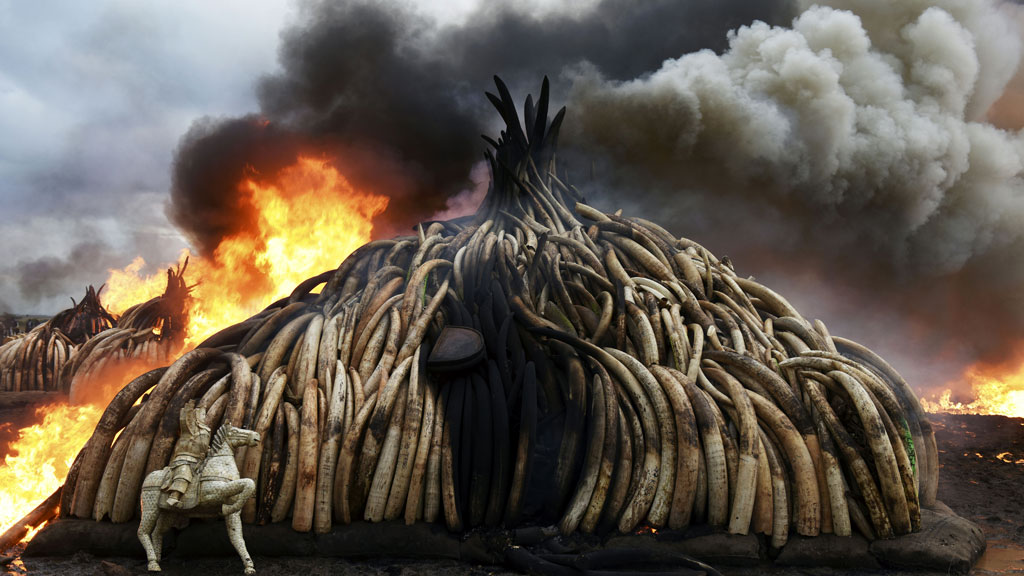 Stack of burning elephant tusks, ivory figurines and rhinoceros horns at the Nairobi National Park on April 30, 2016. (AFP)
