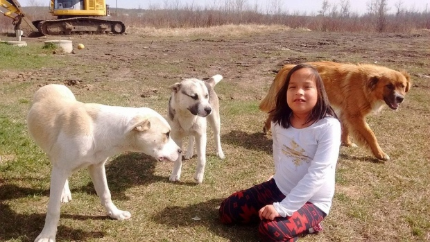 Young girl missing in Canadian forest kept warm by her three dogs