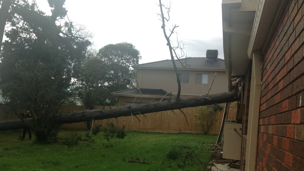 A tree fell onto a house in Boronia in Melbourne's east. (9NEWS)