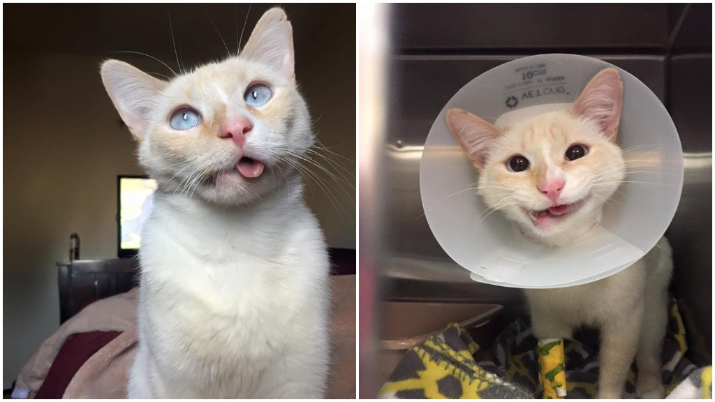 Rescued cat learns to smile again after breaking its jaw