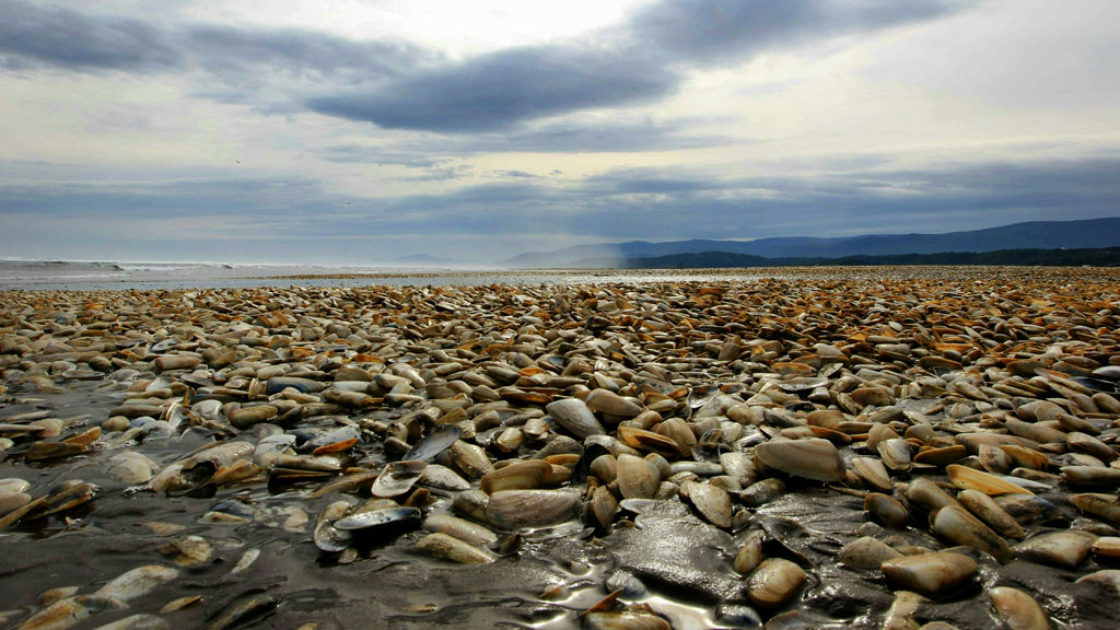 Wave of dead sea creatures hits Chile's beaches