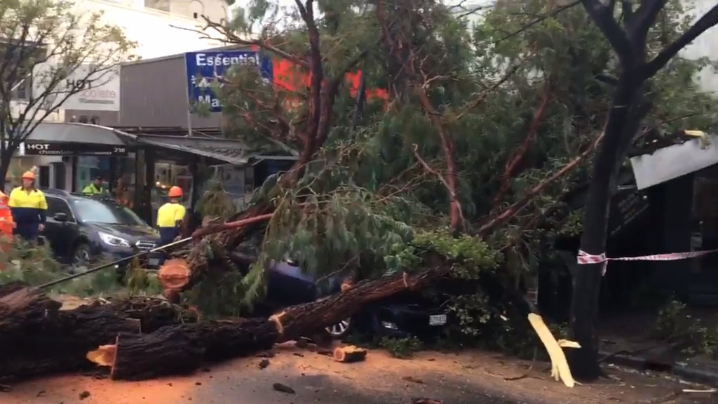 A tree was blown over on The Parade in Norwood this morning. (9NEWS)