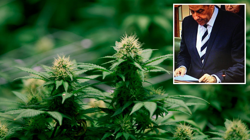 Queensland moves to legalise medicinal marijuana a day after death of cancer-stricken toddler once given cannabis oil