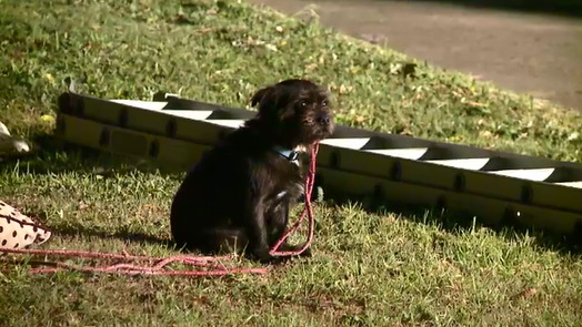 A small dog escaped injury in the crash. (9NEWS)