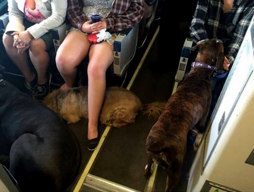 Airline allows pets to fly with their owners to escape Canadian wildfires